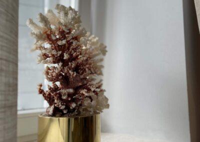 Dalmatinske reticele koralji